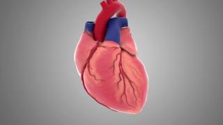 医学人体模型三维动画-演示心脏手术跳动过程