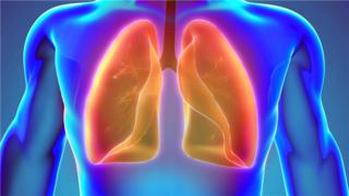 医学3D动画演示-人体肺器官