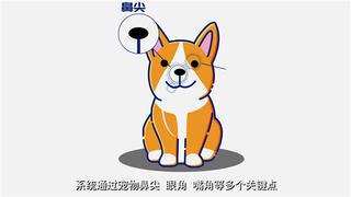 APP演示动画制作-宠物保险